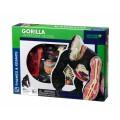 """Thames & Kosmos edukacinė priemonė - modelis """"Gorilos anatomija"""" (260900)"""